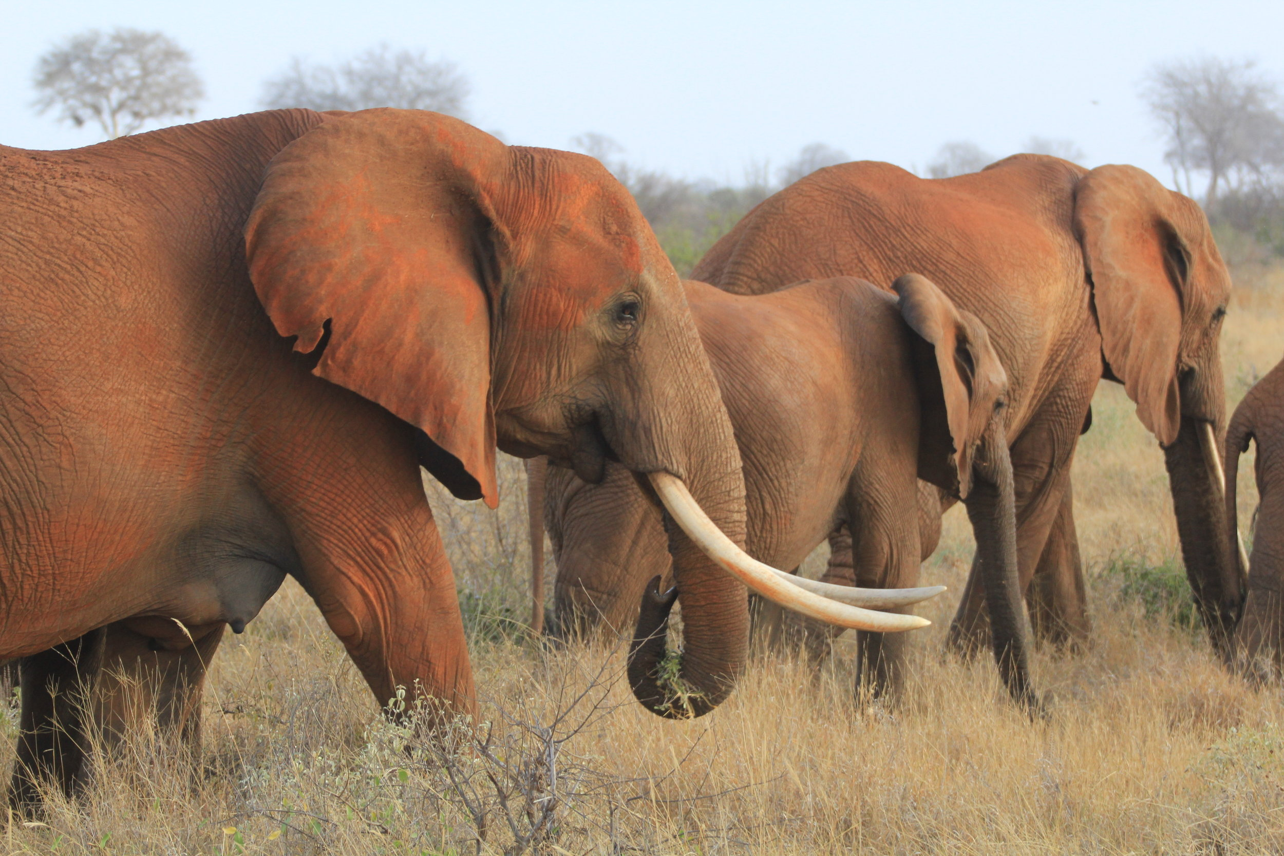 elephants in stave east national park
