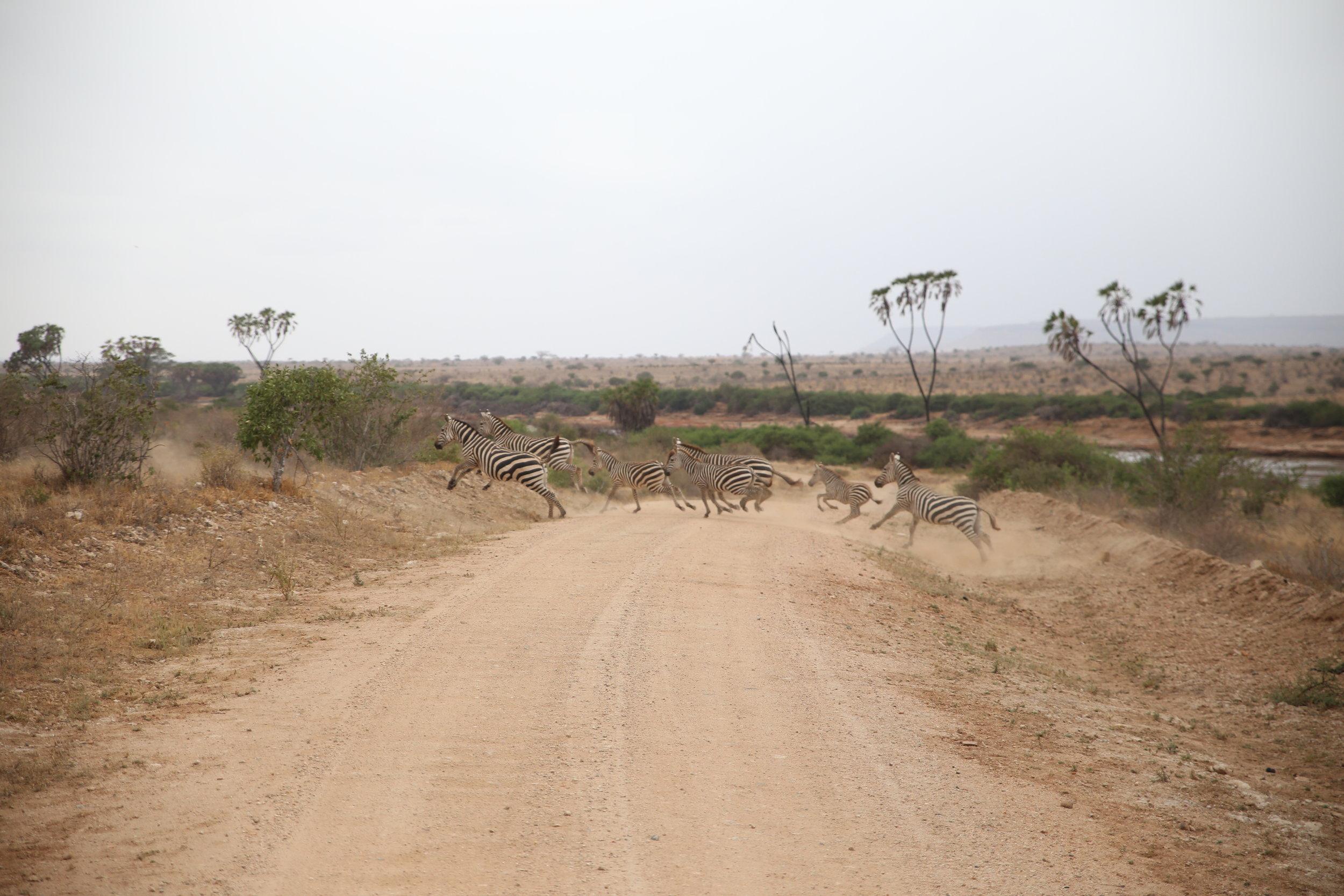 zebras kenya safari camp