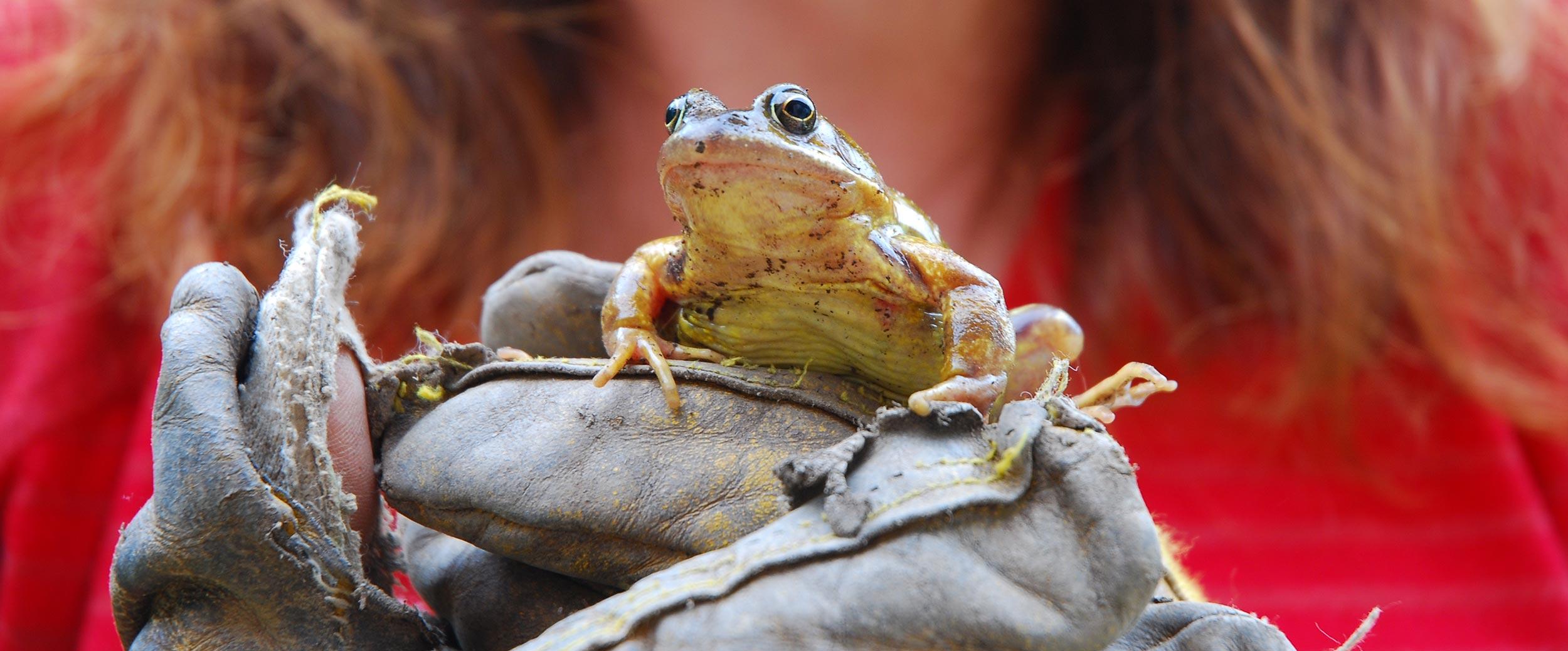 37.-Garden-visitor.jpg