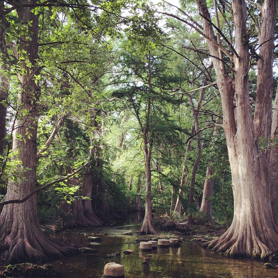 cibolo nature center boerne texas