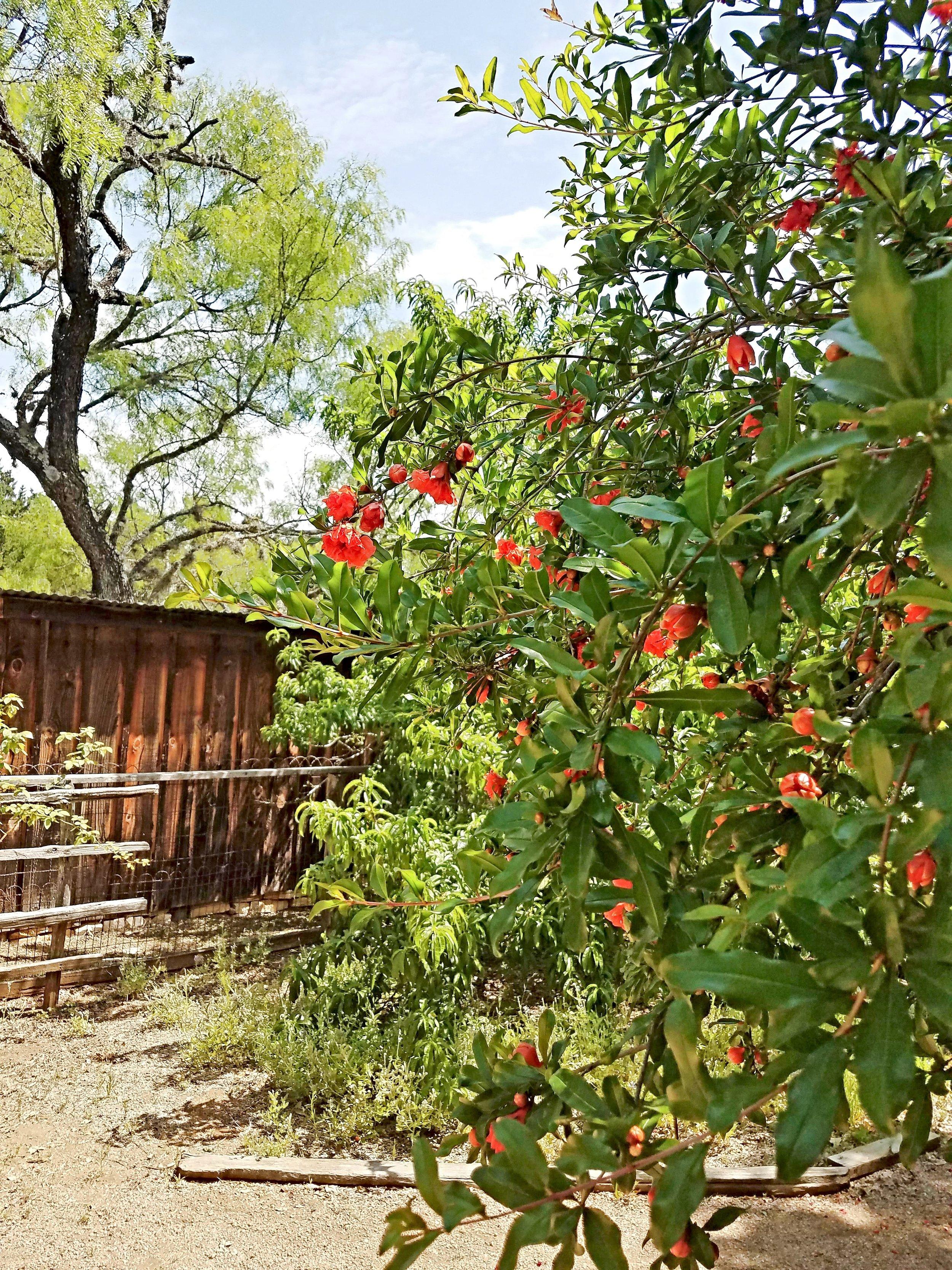 Sauer-Beckmann Living History Farm LBJ State Park Stonewall Texas