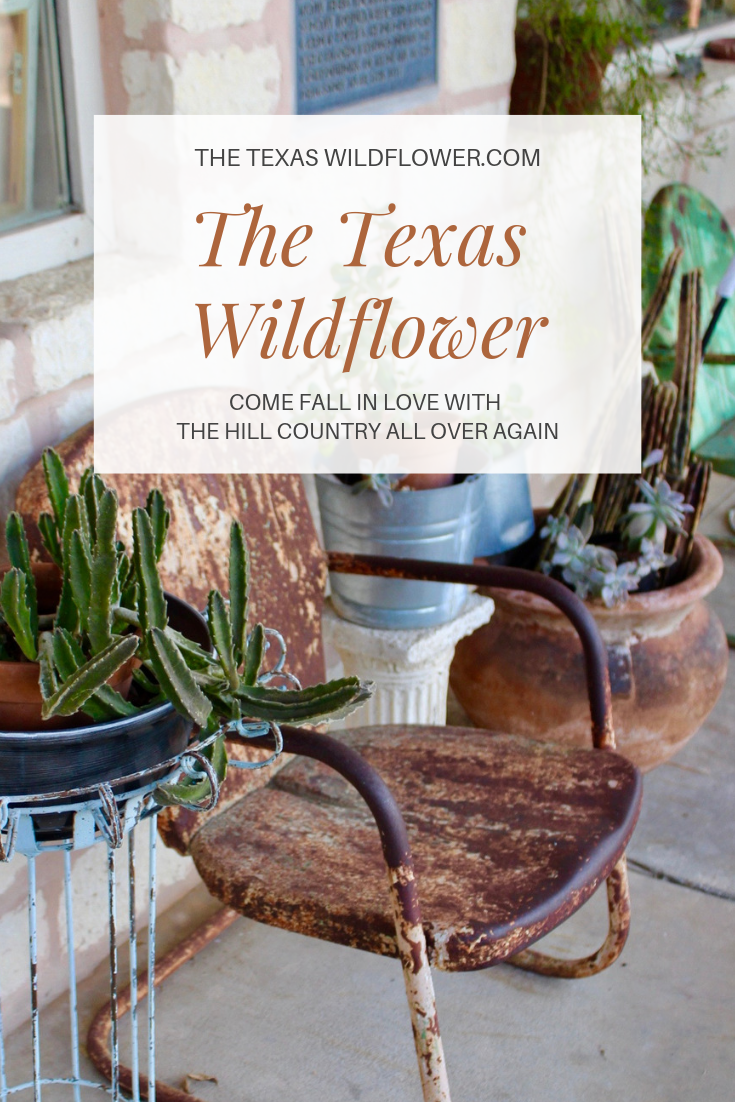 the texas wildflower magazine texas hill country sowing seeds blog boerne