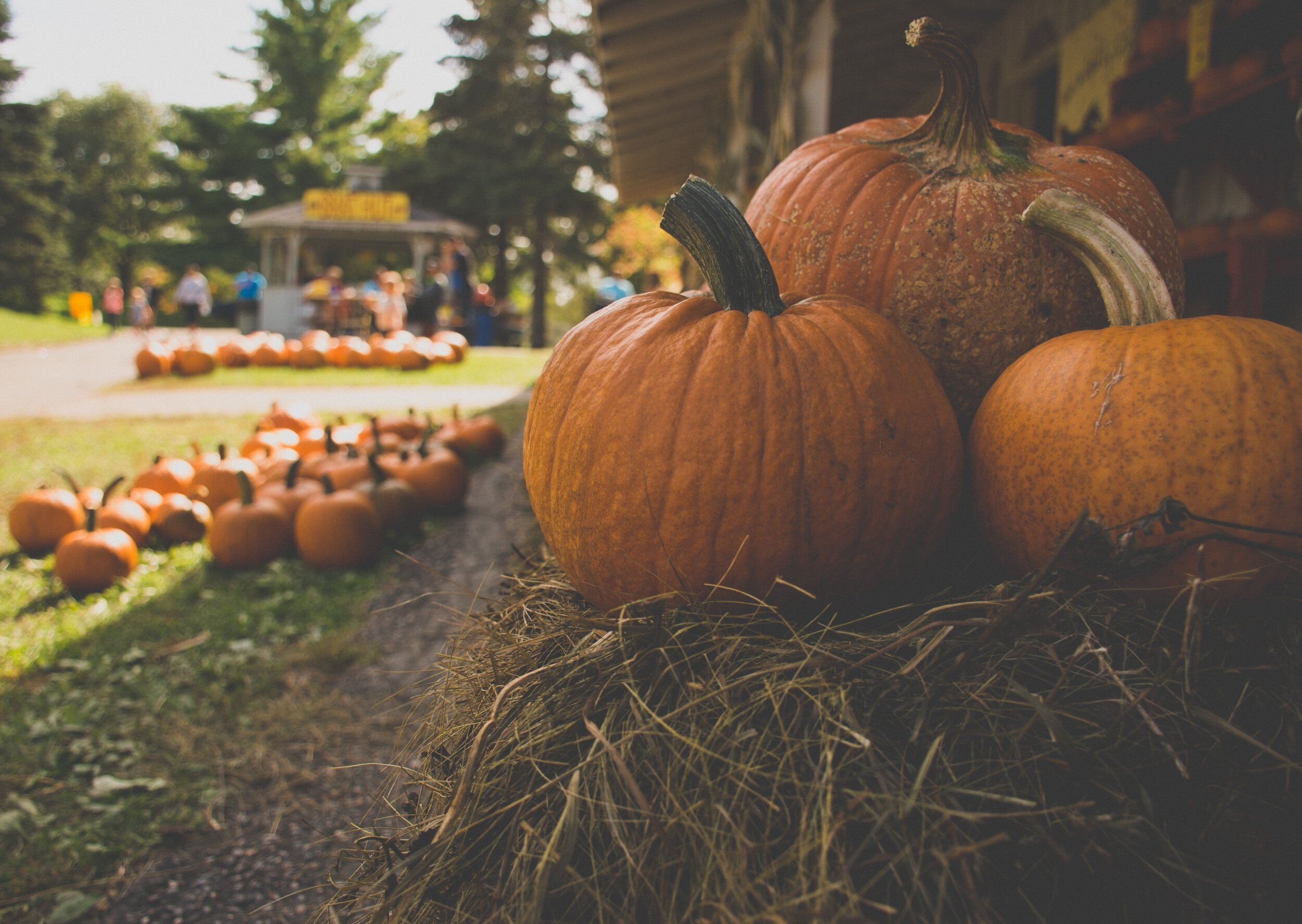 2019 Hill Country Fall Festivals Events and oktoberfests boerne texas san antonio sowing seeds blog