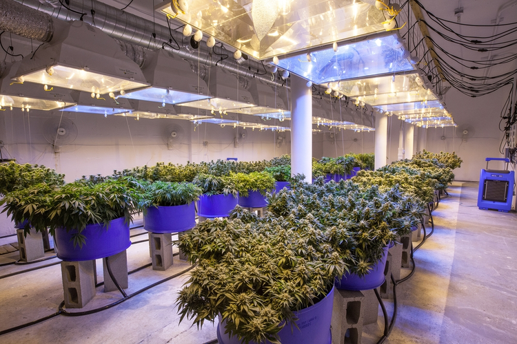 Cannabis Grow Room Design Considerations - The overall perception of cannabis is changing dramatically in the United States as lawmakers and citizens alike begin to realize the benefits the plant can provide for the medical sector.