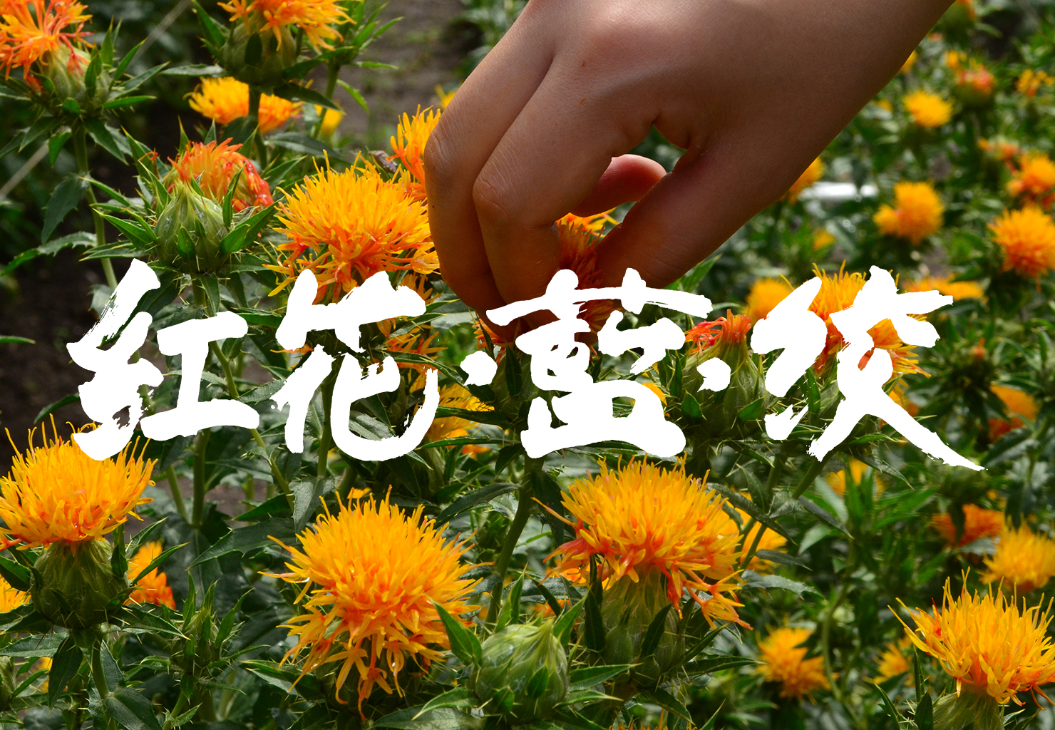 Homepage_smallerlogo_11.jpg