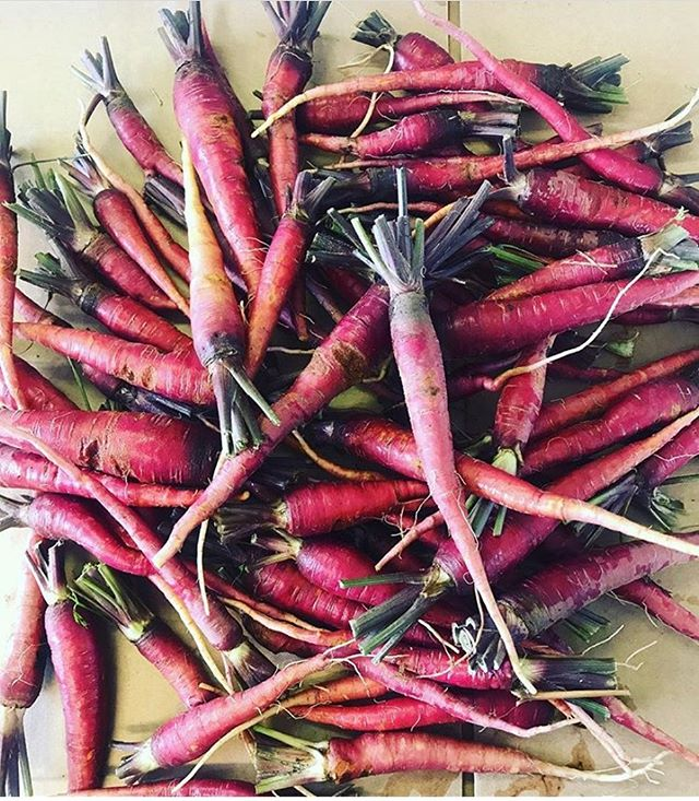 These beautiful purple dragon carrots from Coleman Farm are BACK! Order them with our delicious sloppy Joe and chili ranch by tomorrow at 6 a.m. Always fully prepared! • • • #farmtofork #eattherainbow #simpleroots #rooted #simplerootsmealdelivery #healthyliving #Cleaneating #glutenfree #dairyfree #paleo #whole30 #simplerootsmeals #nutrition #detox #instafood #foodies #food #local #fitfam #fitness #organic #mealdelivery #midwest #healthymidwest #eatwell #keto #ketomeals #stlouis