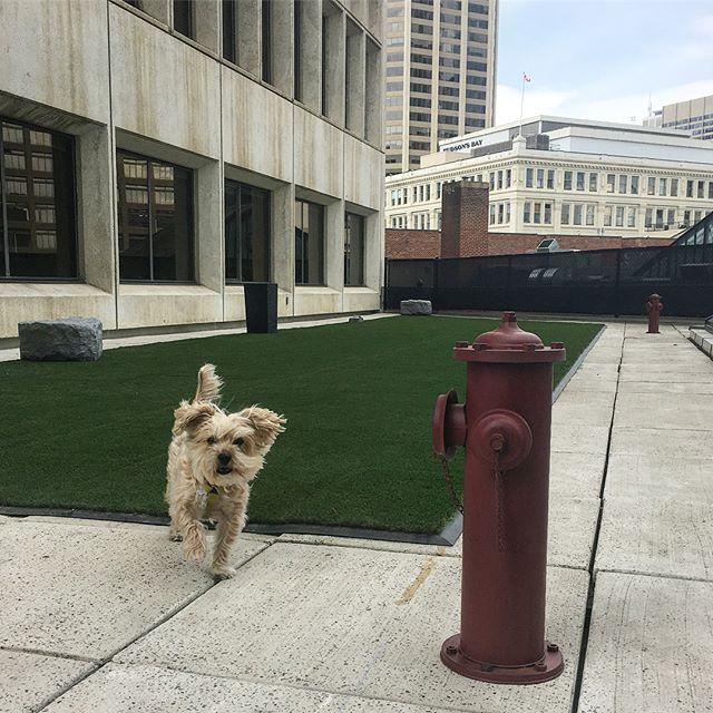 Dog Patio NOW OPEN! 🐾🐩🐕🐶 #edisonamenities #dogsoftheedison #dogsofinstagram #dogfriendly #yyc #officedog