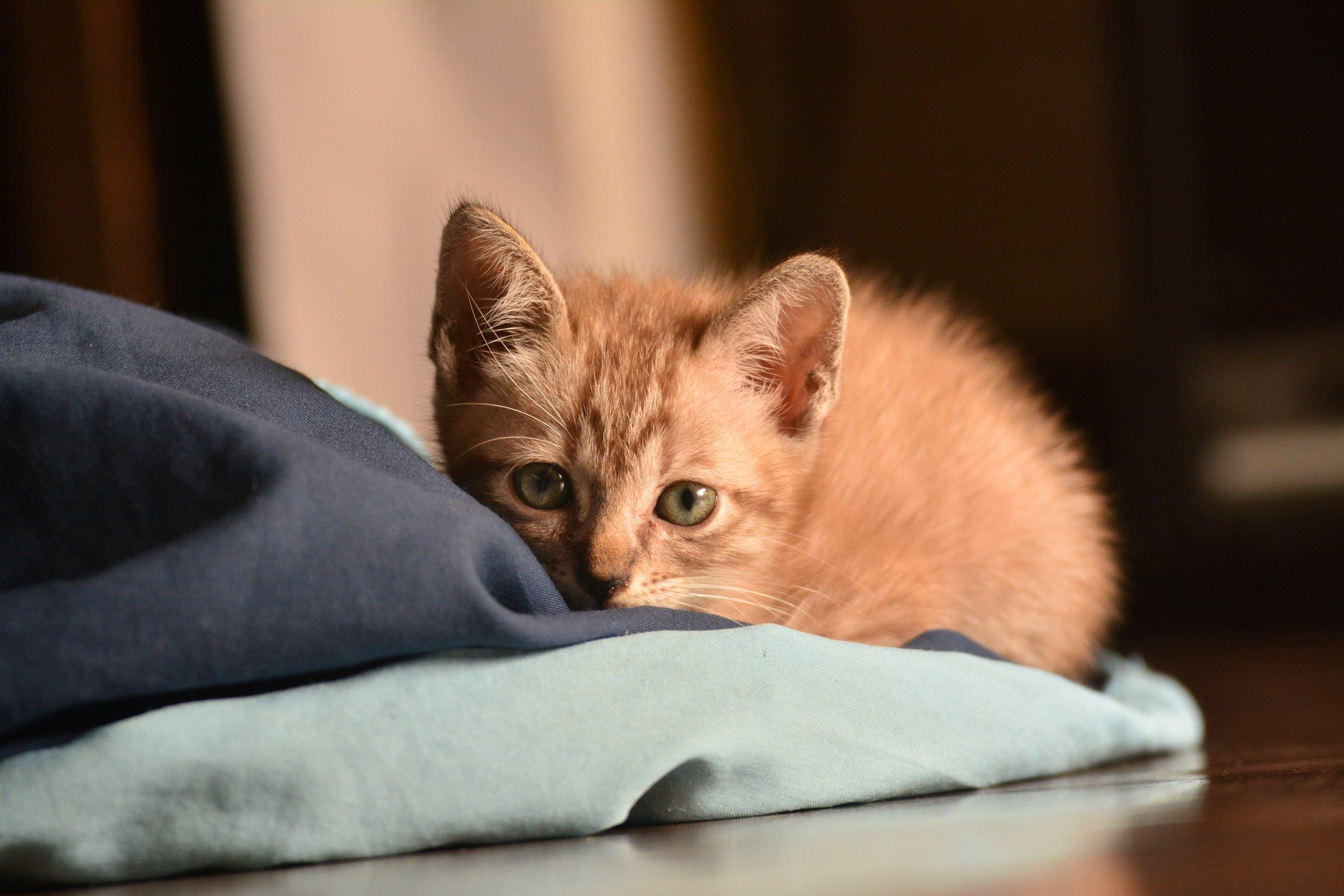 adorable-animal-animal-photography-1629061.jpg