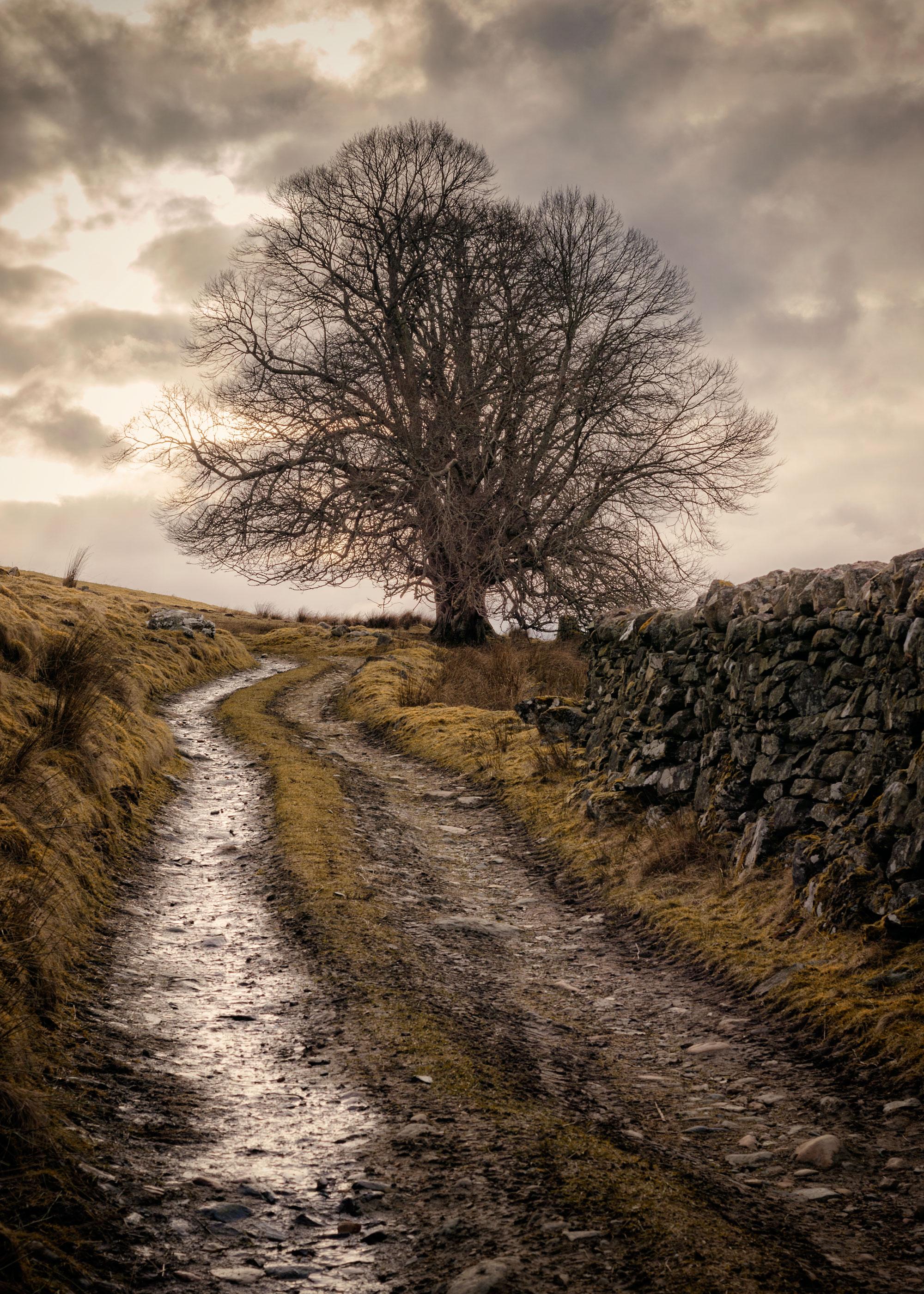 Acharn Tree