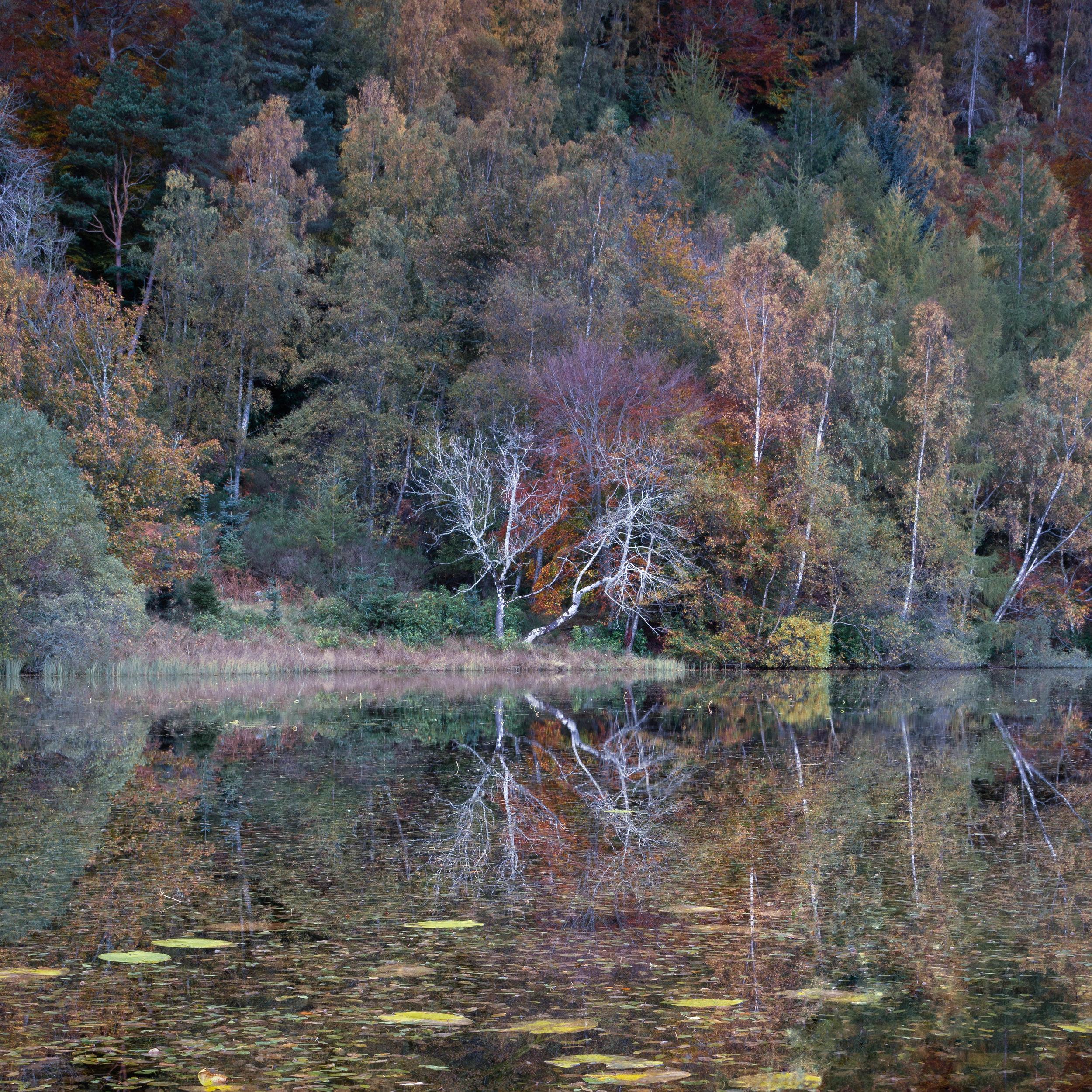 Autumn's Rainbow