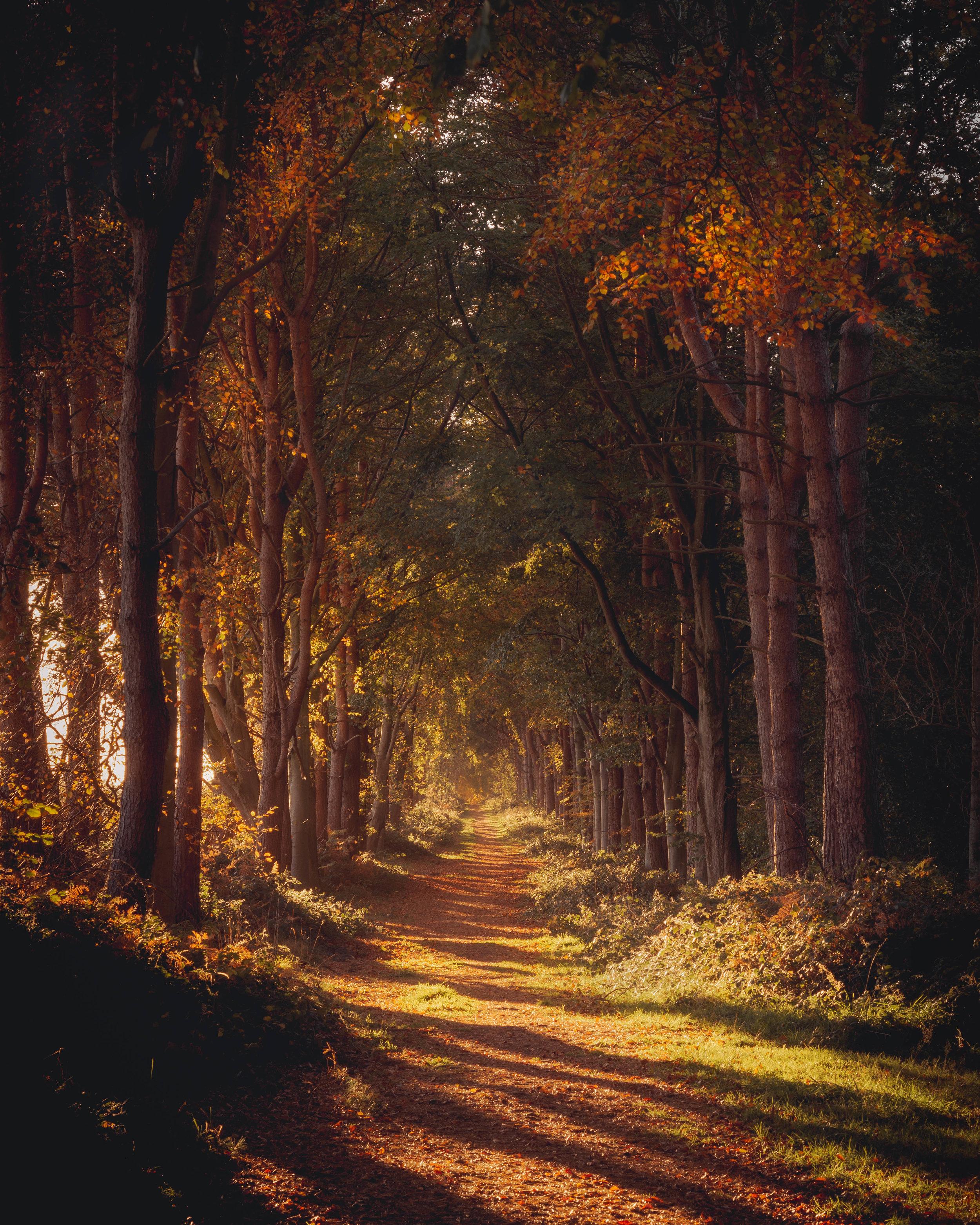 Autumn Evening in Binning Wood