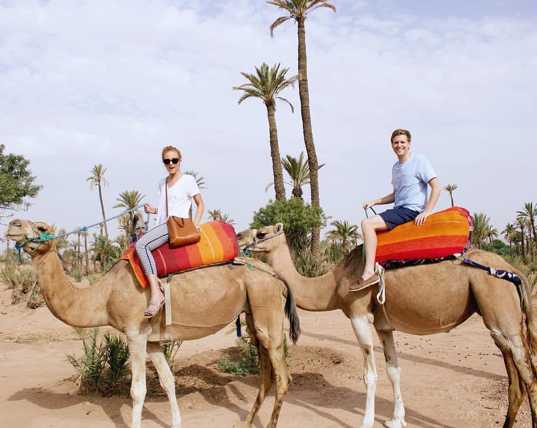Both Camels.jpg