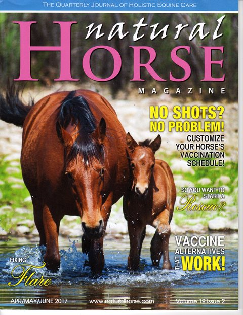 Training Tools for Gentle Horse Training