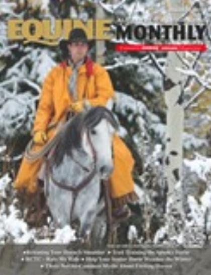 Horse Communication - Beyond Words