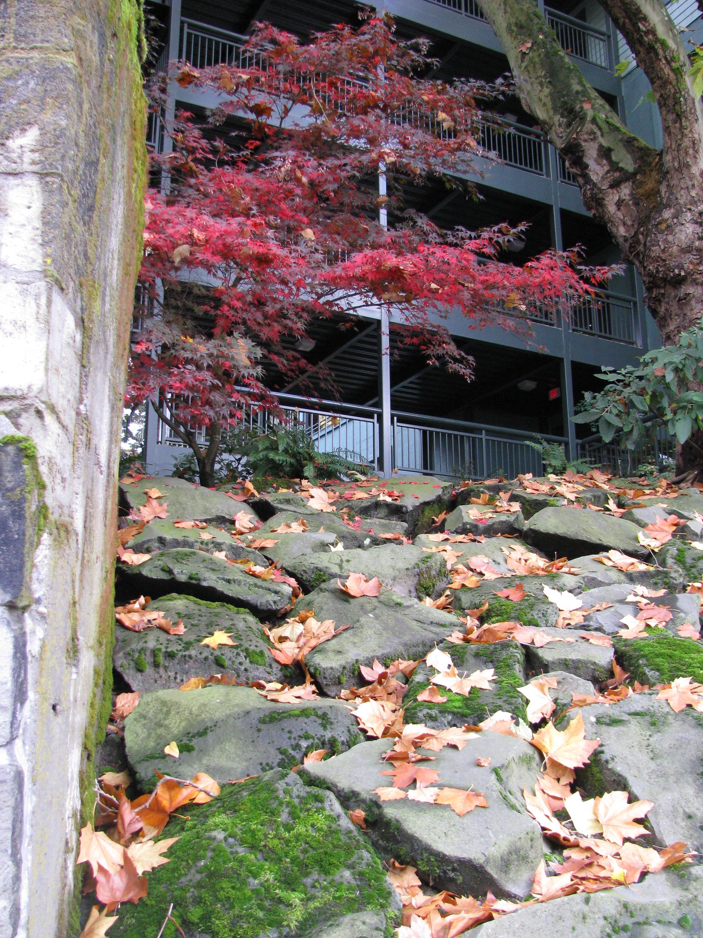 Arbor Vista Nov 08 006.jpg