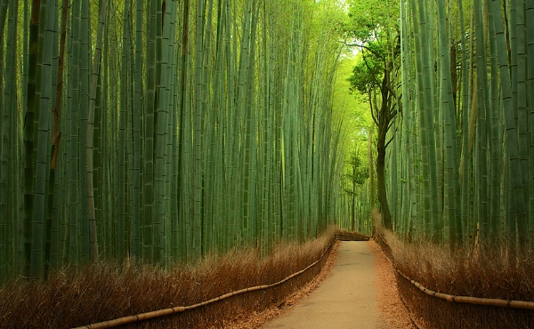 Bamboo Business Growth