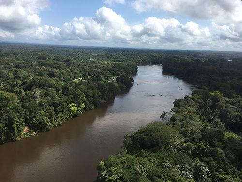 SurinameForest.jpg