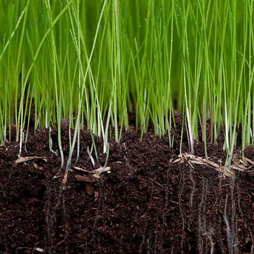 SoilGrass.jpg