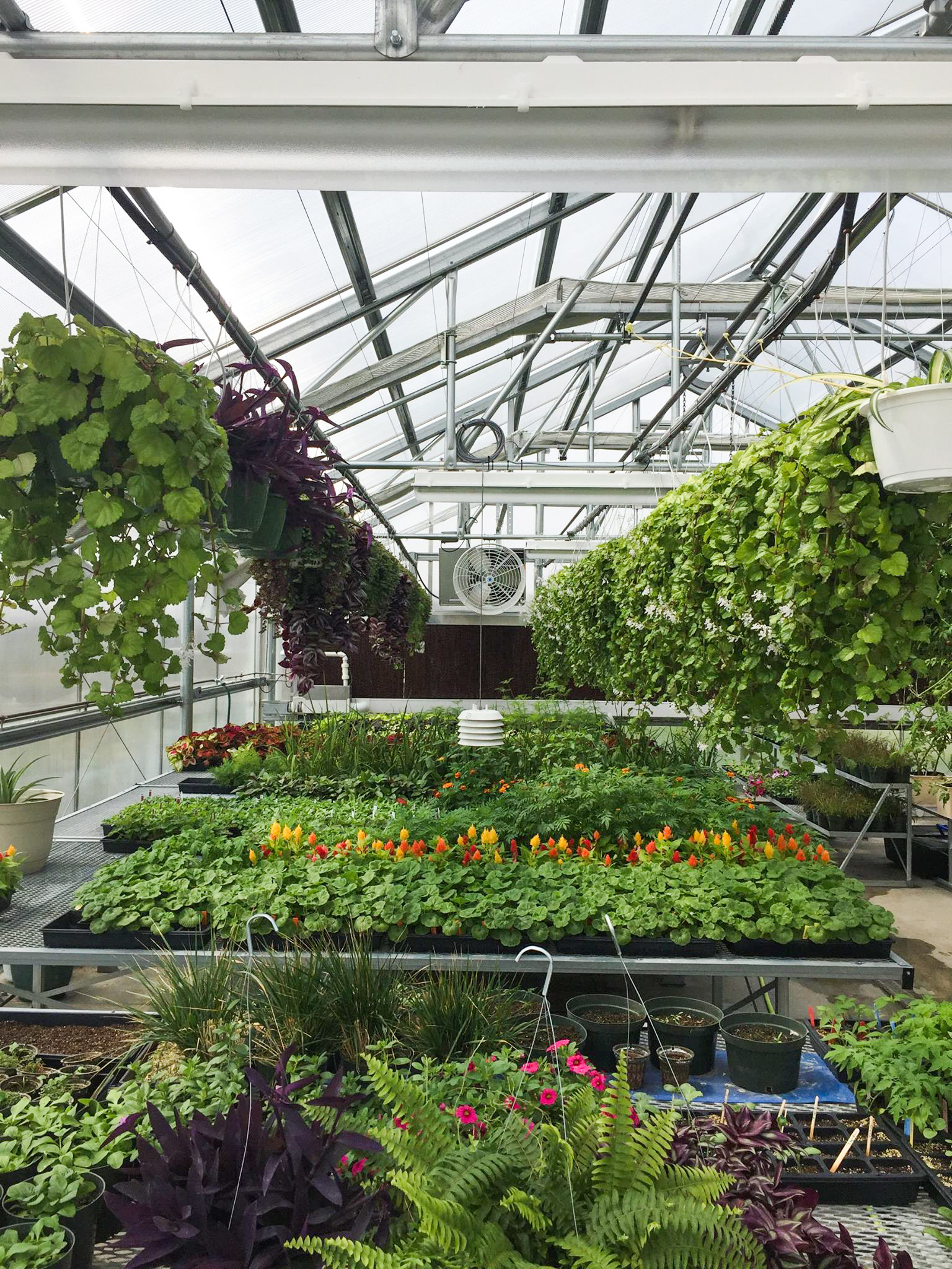 Royal Valley High School Greenhouse   Client: USD 337 Royal Valley Architect: HTK Architects