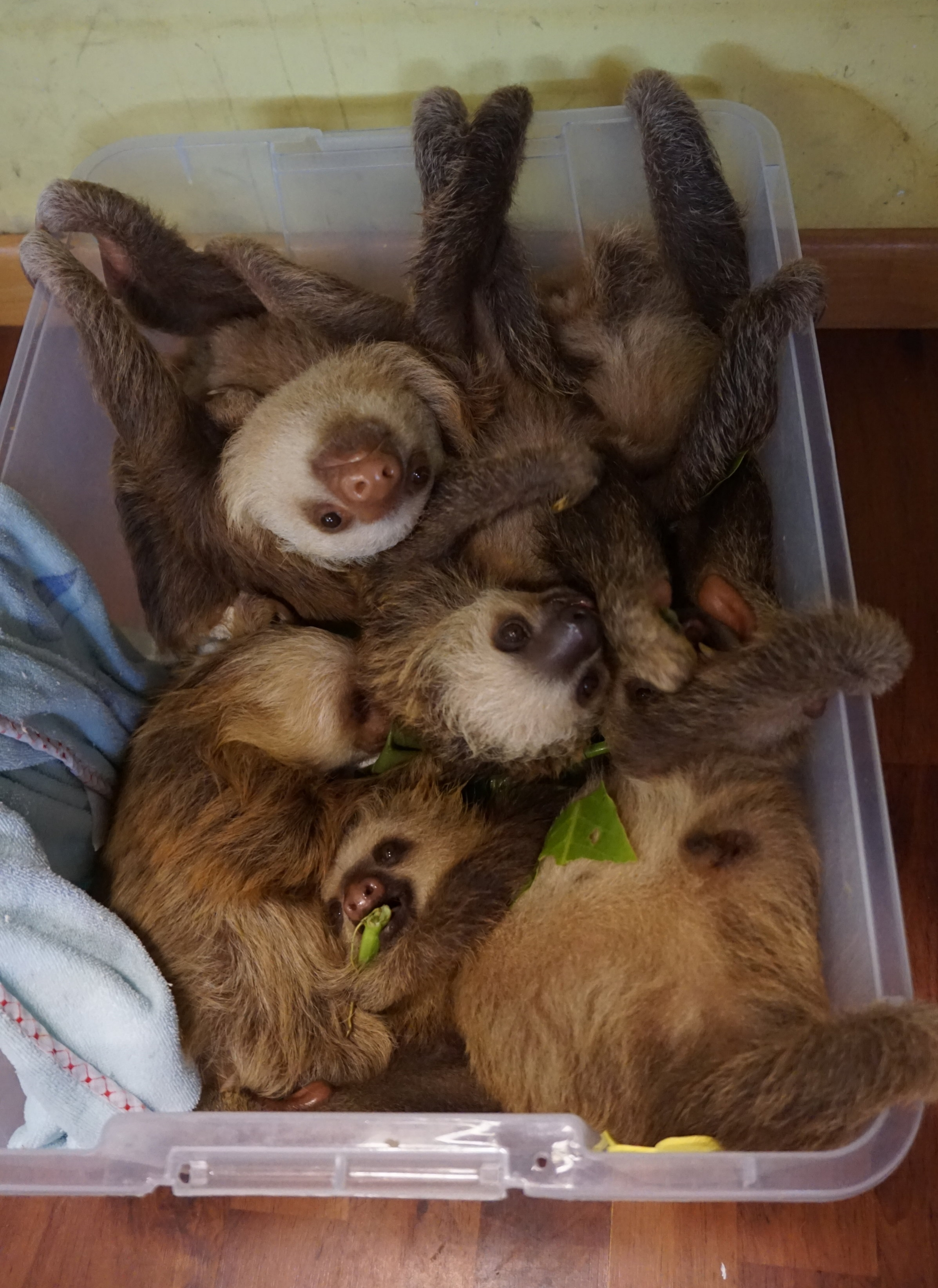 Photo: A bucket of sloth cuteness.
