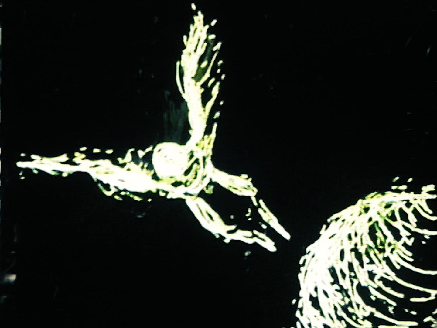 Still from  Morfos ,Pilar Forero (2006).