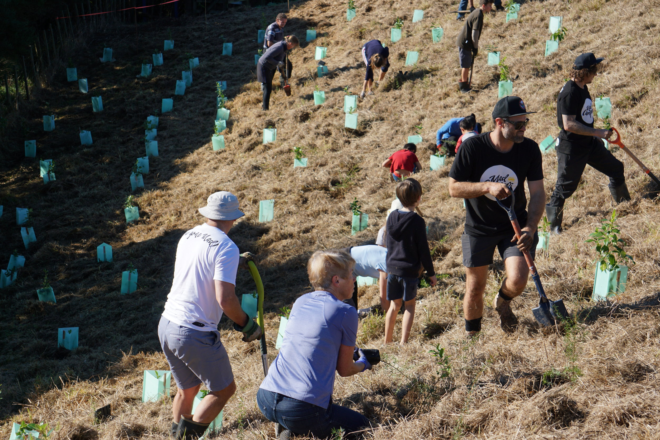 Conservation Planting Native Trees Auckland New Zealand