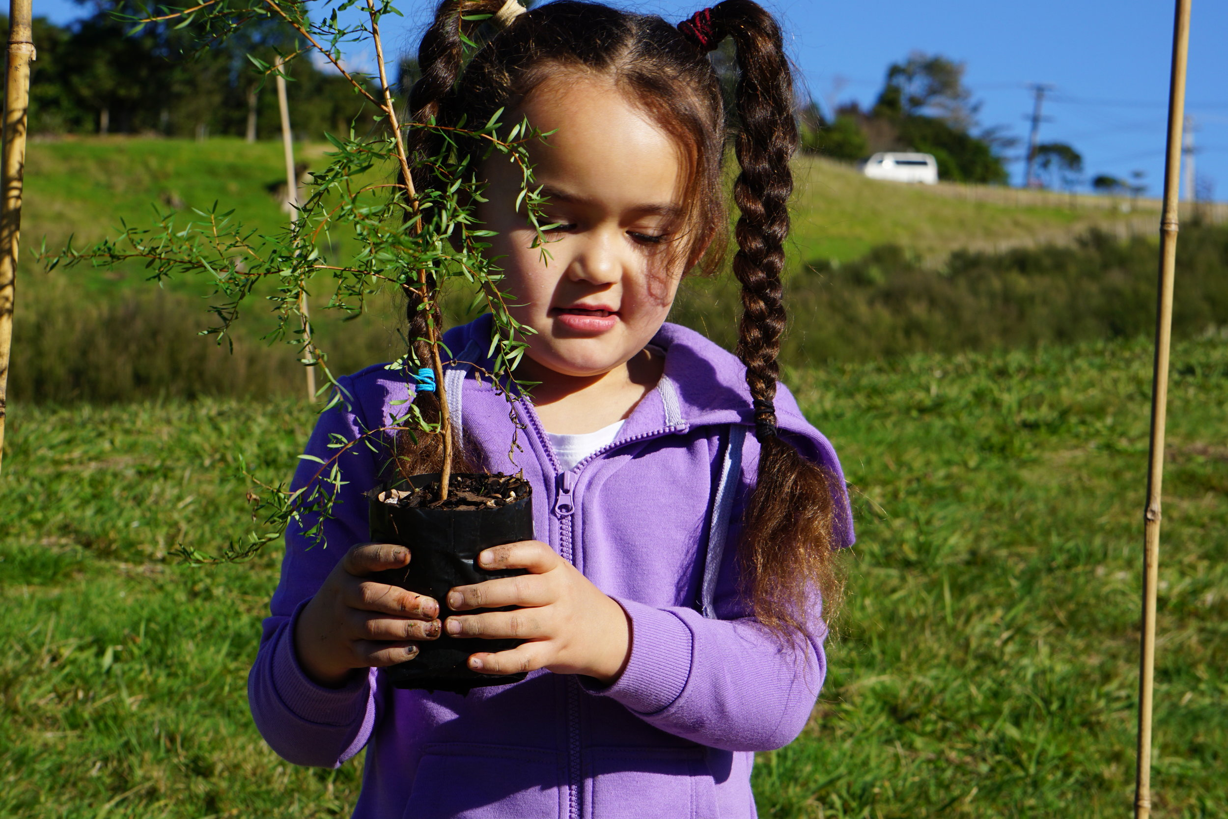 Planting Native Trees in Auckland New Zealand