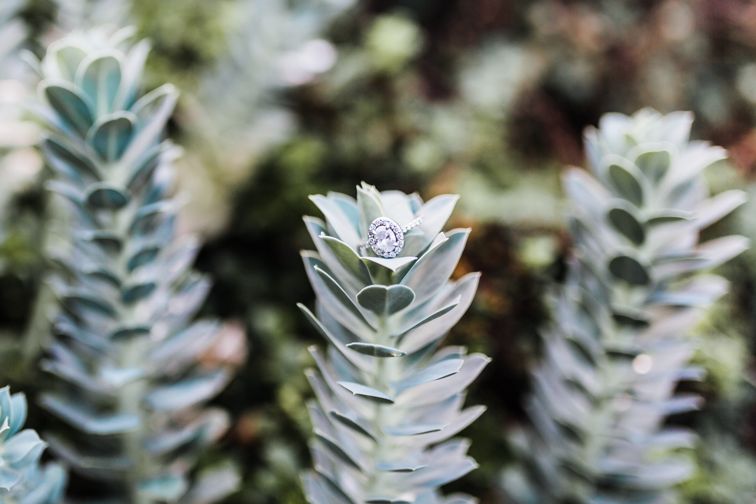 engagement ring on succulents - baltimore wedding photographer and cinematographer