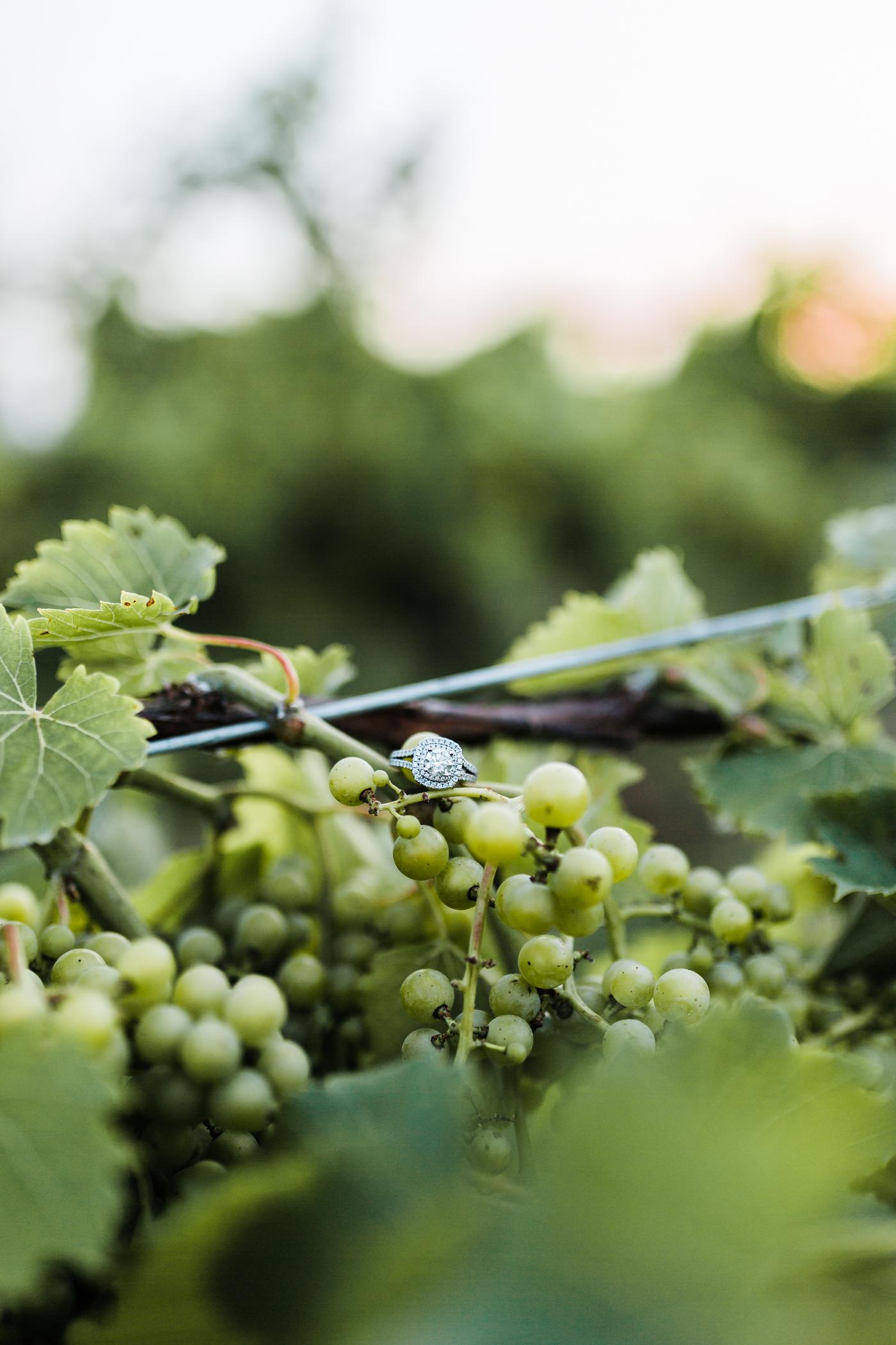 engagement ring shot on vineyard vines and grapes - pennsylvania