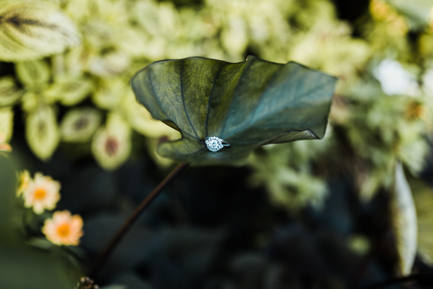 round cut engagement ring with halo and side accents - maryland wedding and engagement photographer - Rawlings Conservatory engagement session