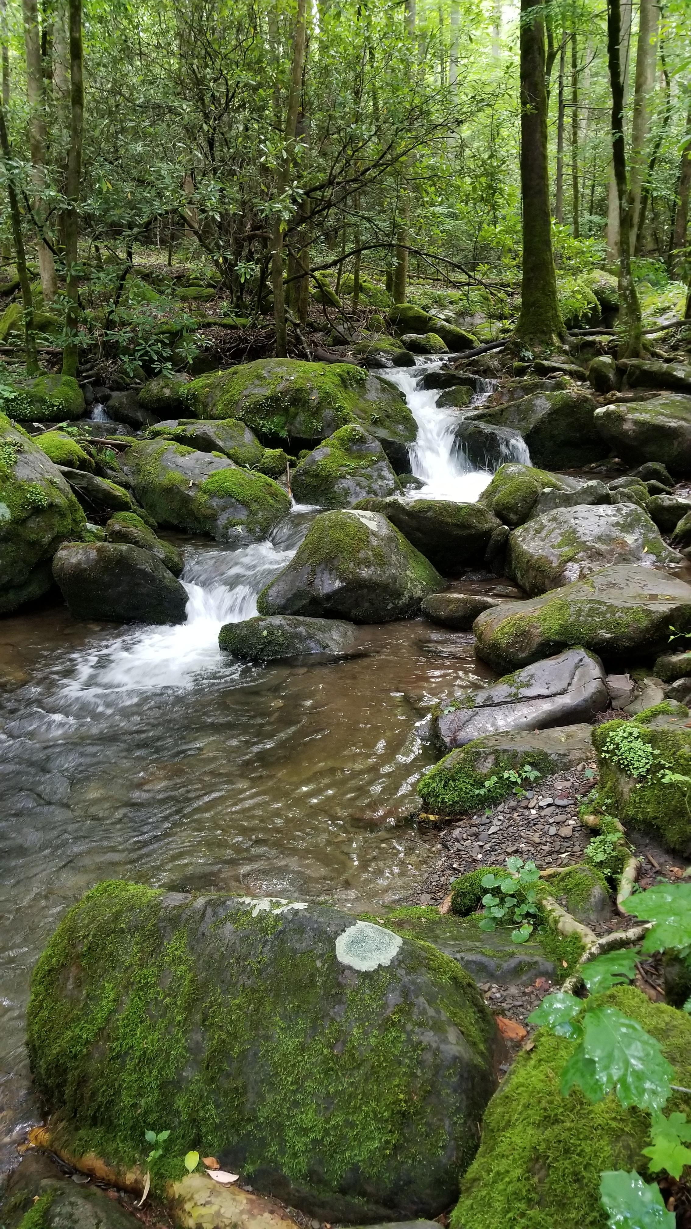 Big Creek Great Smoky Mountains National Park