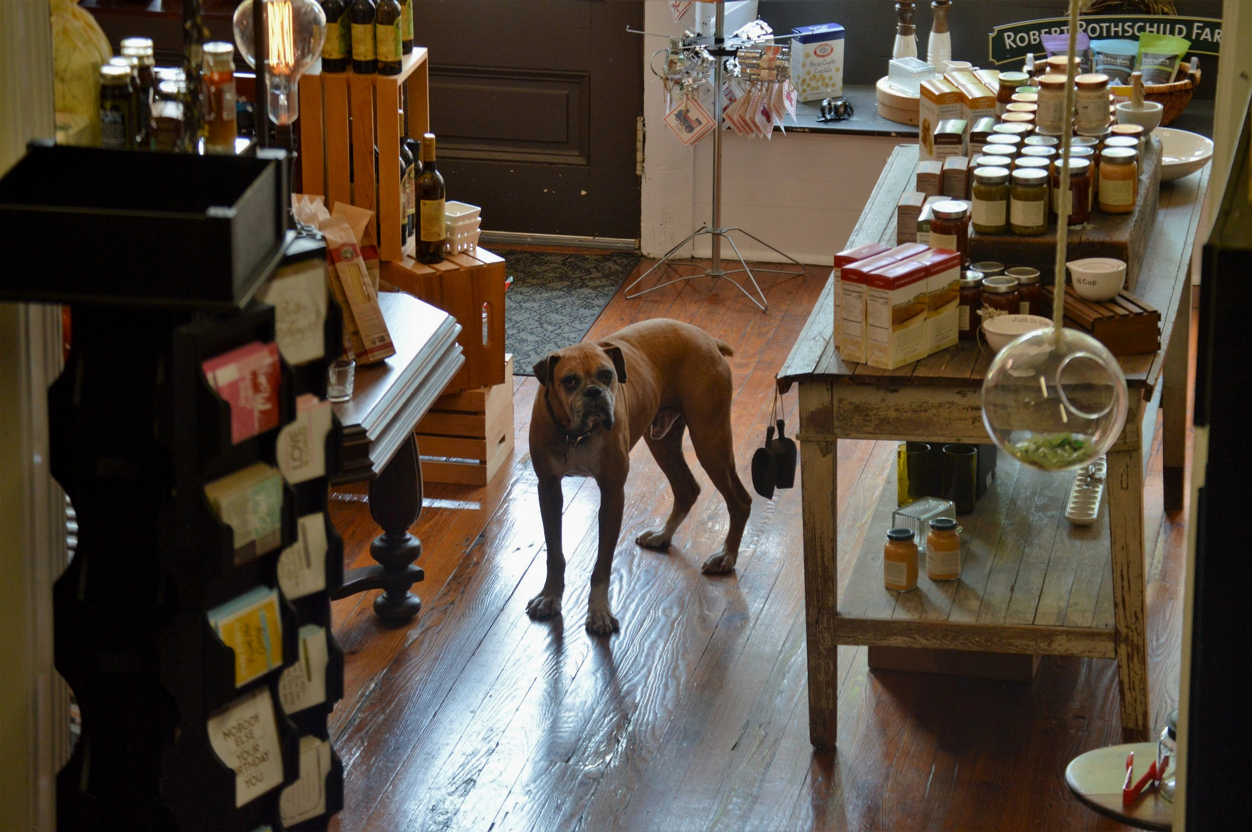 A dog named Pendleton is a regular fixture at Urban 2 Country a store featuring gourmet kitchen items, a candy counter featuring decadent sweet treats and many more items.
