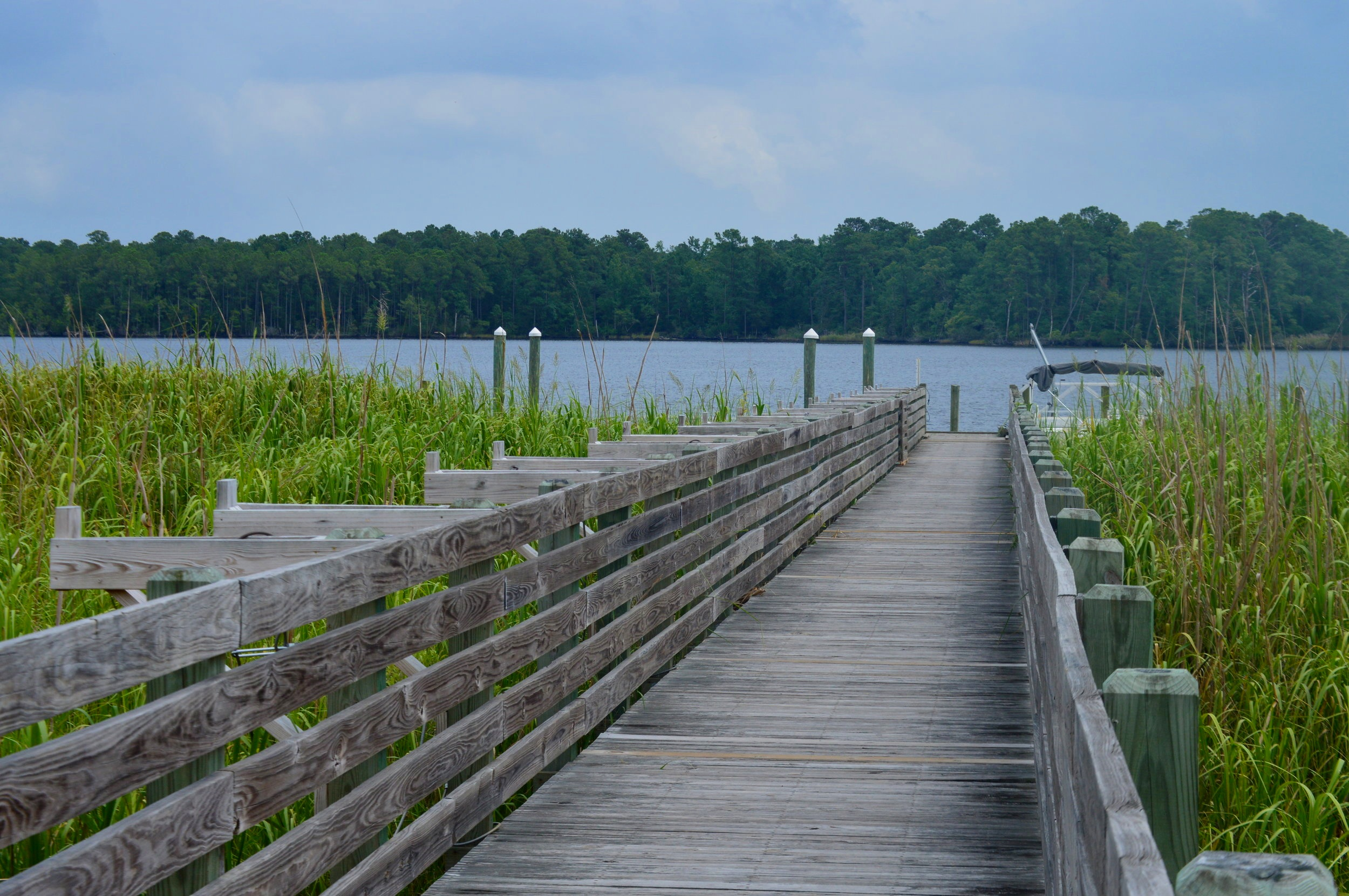 Sturgeon City Park brings you up close to the story of a substantial environmental restoration effort in Jacksonville, NC.