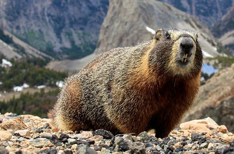 wildlife_marmet.jpg