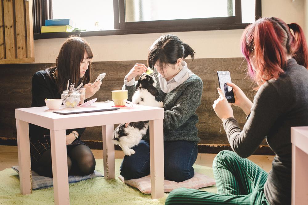 Rabbit-cafe-tokyo-RAAGF.jpg