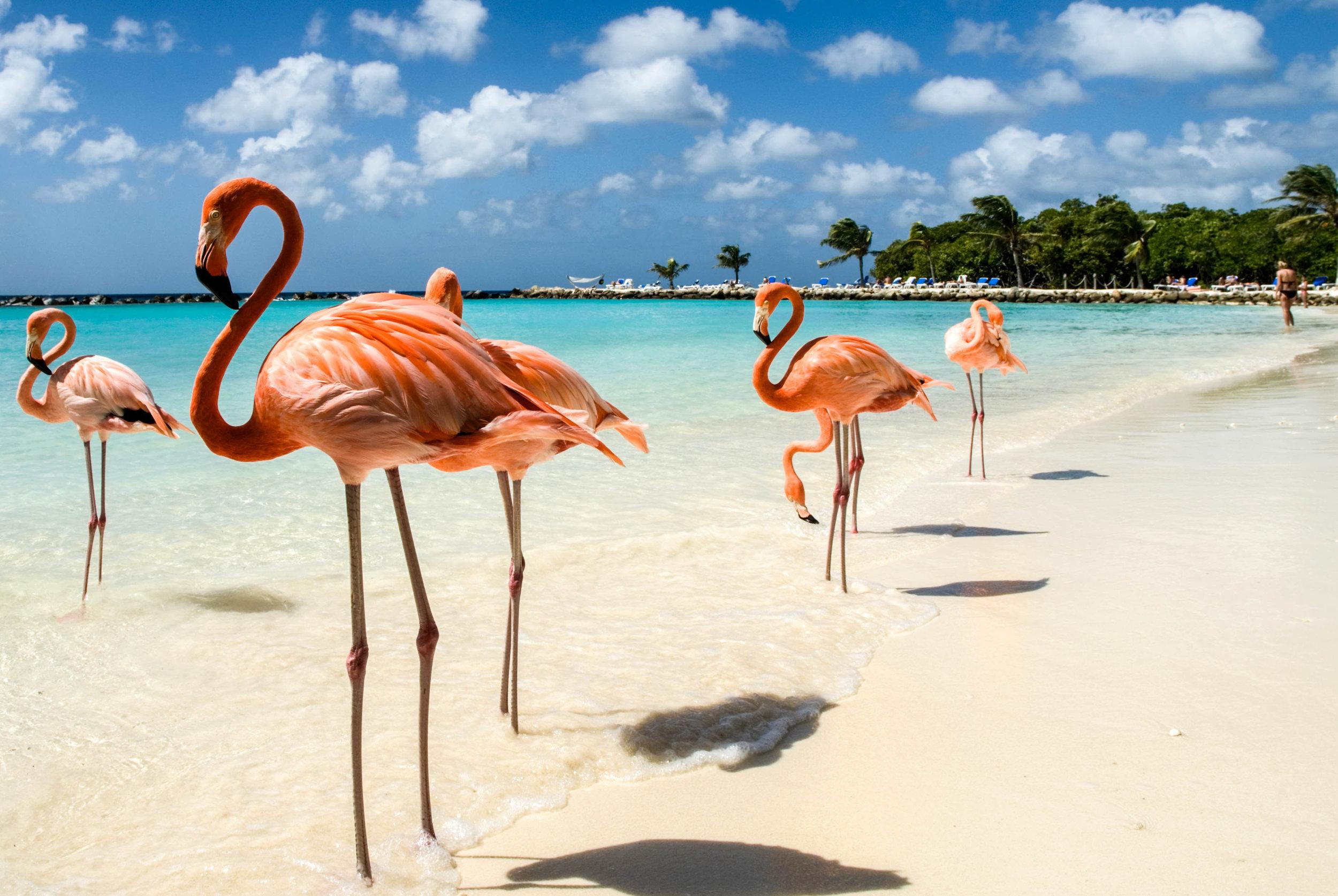 Flamingos-on-the-Beach-iStock_8252068_LARGE-2.jpg