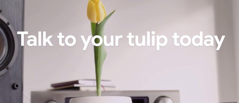 Google-Tulip-1170x508.jpg