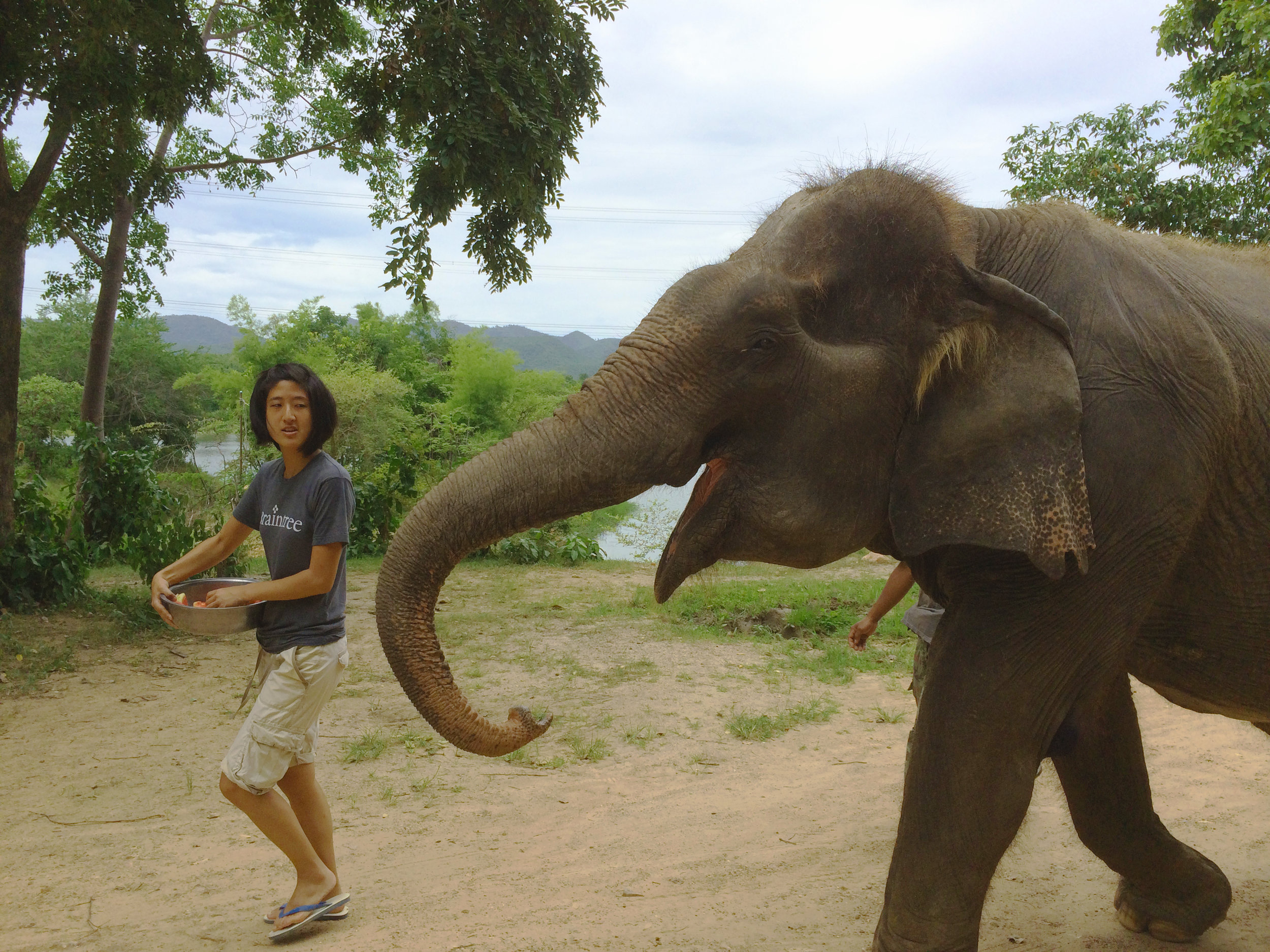 Daily walks and showers helped to keep the elephants happy and healthy and allowed us to interact closely with them. This was a great alternative to the abusive practice of elephant trekking.