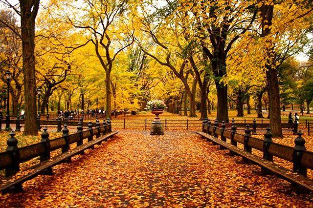 Fall foliage on the Mall @centralparknyc #centralparkmoments #NYC #iloveny #instagramnyc #seeyourcity #autumnleaves #nycfall