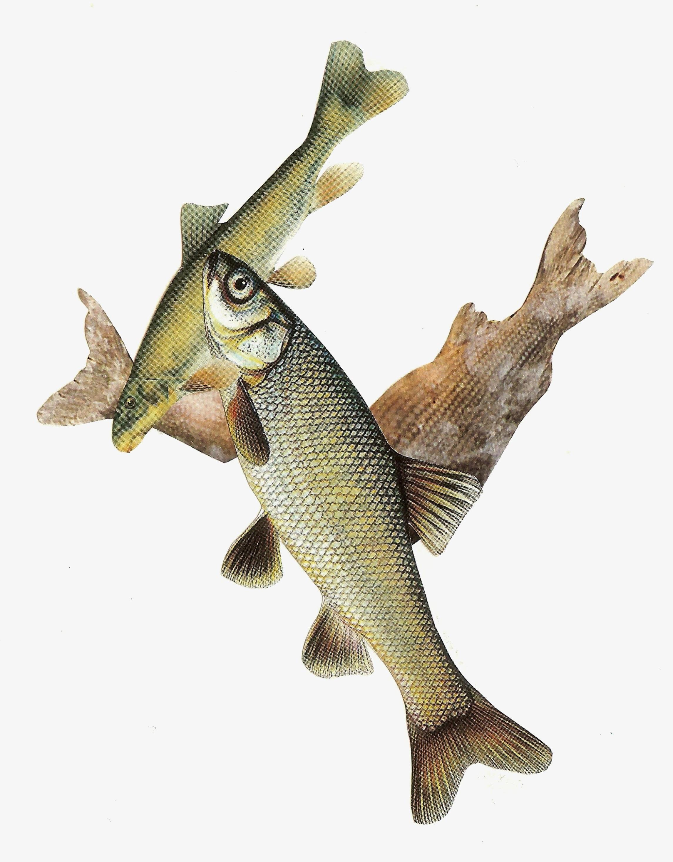 Fish%21%21.jpg