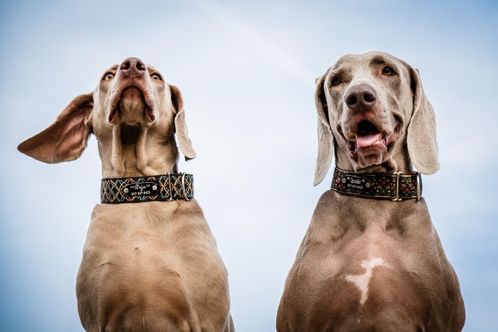 Karen_Dogs-16.jpg
