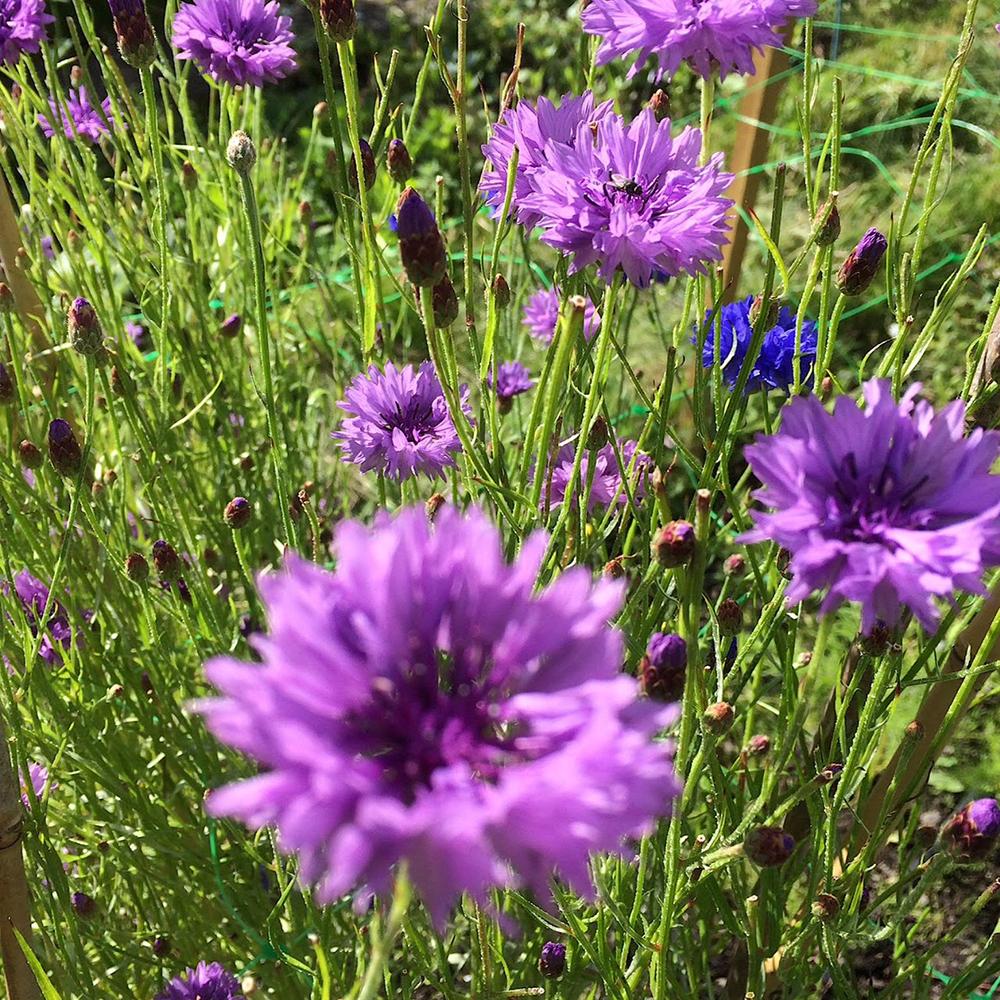 Scottish-wedding-suppliers-confetti-cloudberry-flowers2.jpg