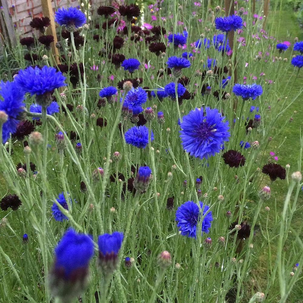Scottish-wedding-suppliers-confetti-cloudberry-flowers5.jpg