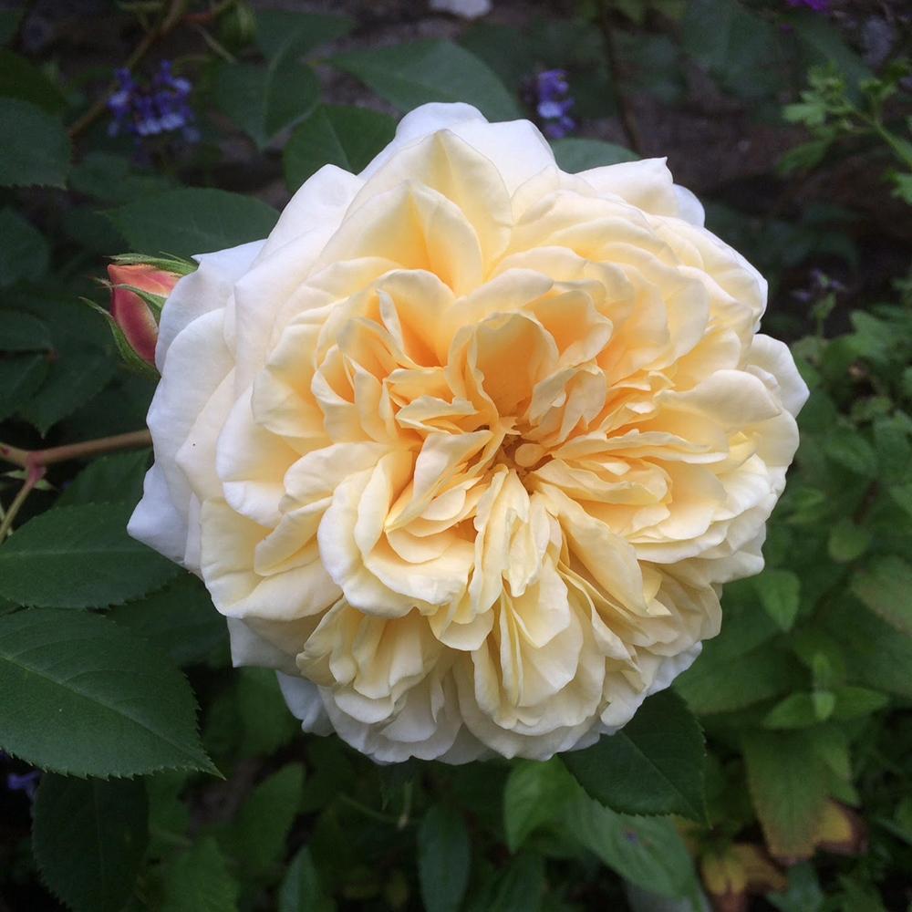 Scottish-wedding-suppliers-confetti-cloudberry-flowers8.jpg