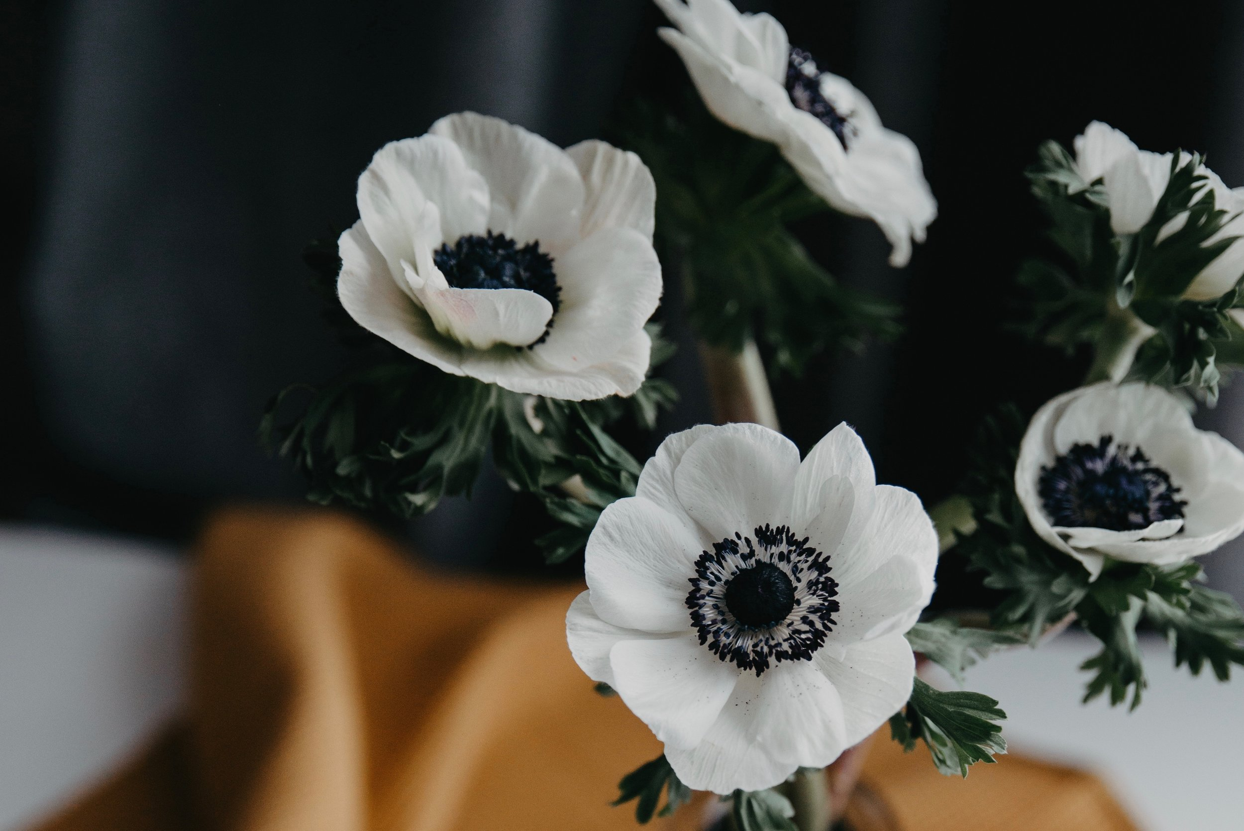 List of spring flowers anenome.jpg