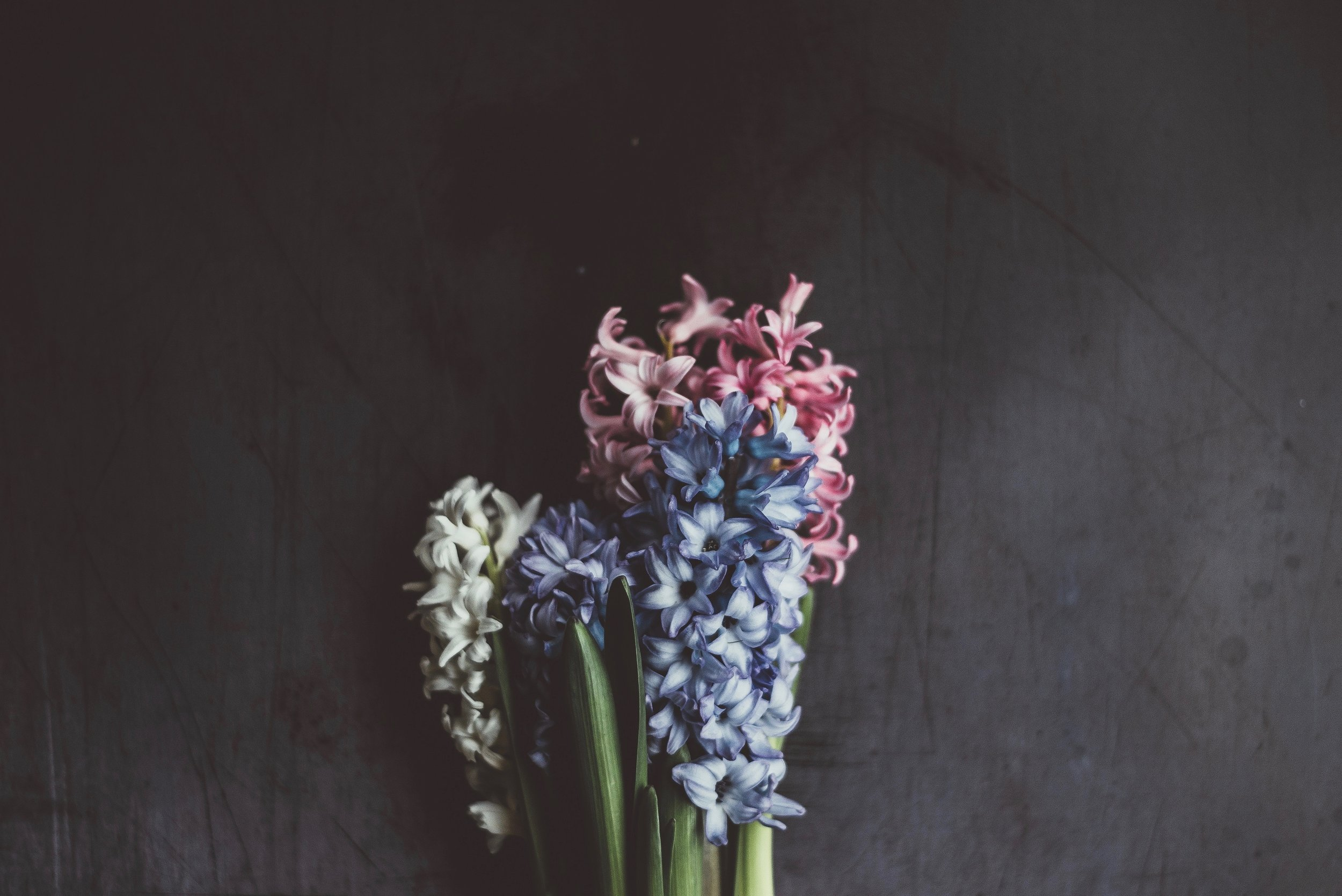 List of spring flowers hyacinth1.jpg