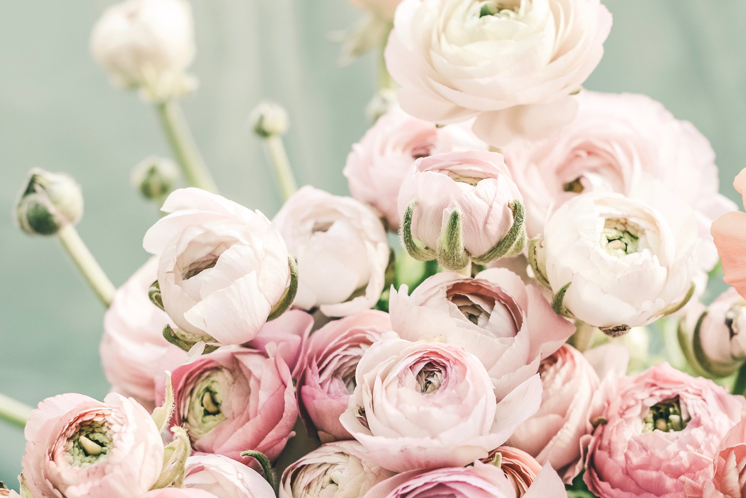 List of spring flowers ranunculus1.jpg