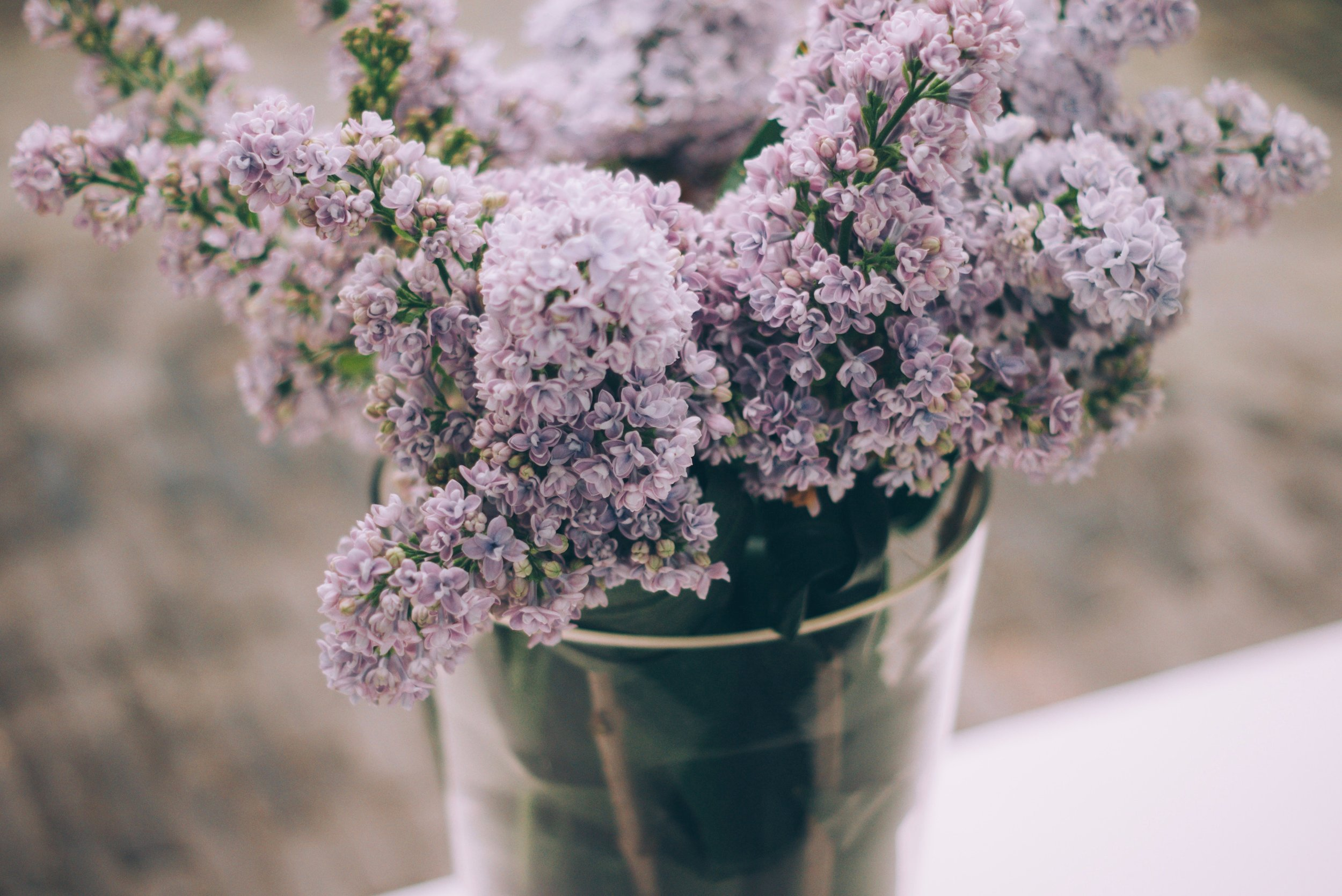 List of spring flowers lilac.jpg