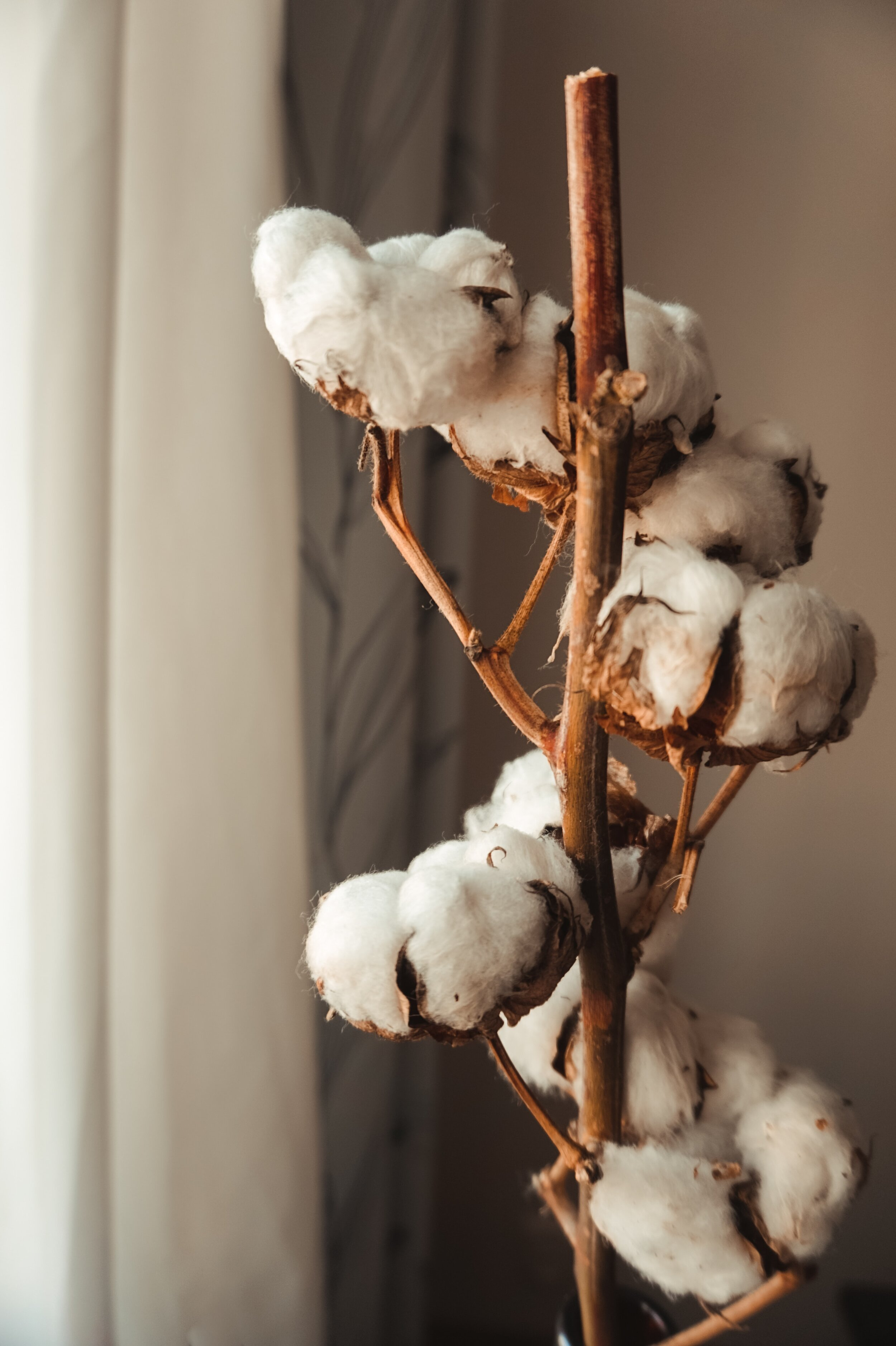 Real Dried Cotton Stems Lavender Rose