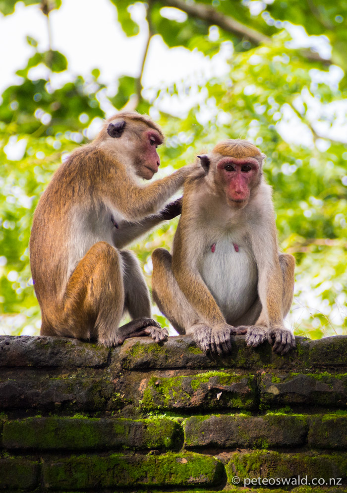 Females grooming